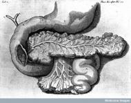 Illustration der Bauchspeicheldrüse © Wellcome Library, London