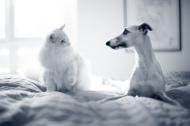 25 AniCura-Tierarztpraxen ausgezeichnet