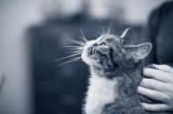 Wie alt ist eigentlich meine Katze in Menschenjahren?
