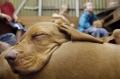 Psychologisches Sandkastenspiel: Hunde als Co-Therapeuten können Diagnose und Therapie psychosozialer Störungen erleichtern. Foto: Torsten Leukert