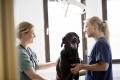 """""""Lohnt sich: der Abschluss einer Tierkrankenversicherung"""""""